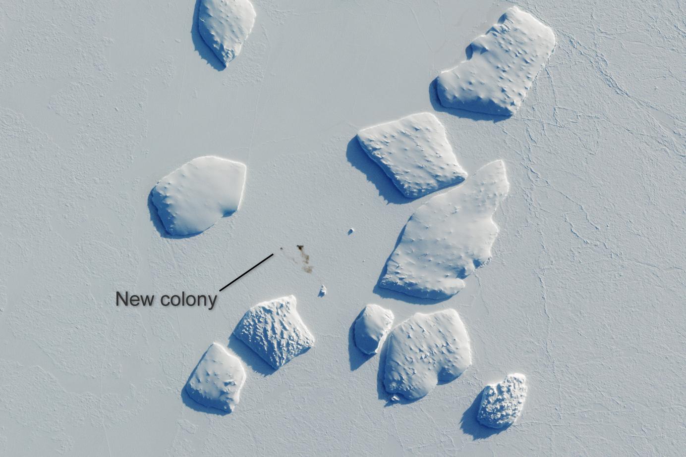 Ninnis Bank - jedna z nowych kolonii pingwina cesarskiego, odkryta dzięki zastosowaniu zobrazowań satelitarnych Sentinel-2. Brązowe plamki na lodzie to ptasie odchody. Uwięzione w lodzie góry lodowe mają po około 2 km średnicy. For. ESA.